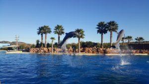 atenu delfinariumas, atenu delfinu sou, atenu zoo