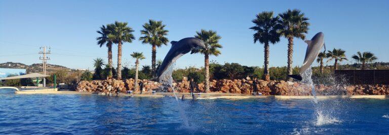 Atenu zoo sodo delfinai
