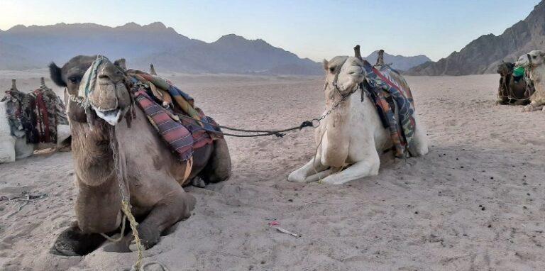 Kelionės į Egiptą